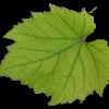 vino-list2